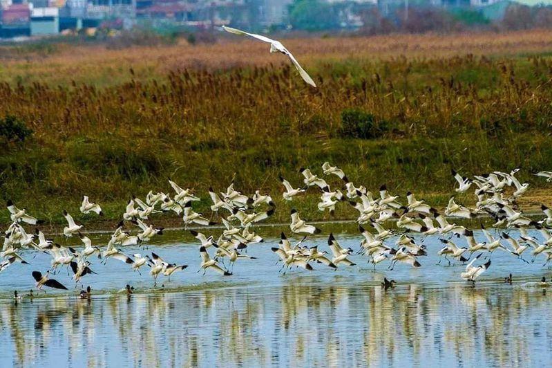 高雄茄萣濕地是新興黑琵樂園,吸引大批人賞鳥、拍鳥。圖/黃蜀婷提供