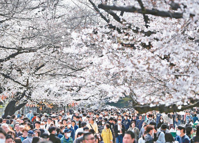 東京民眾三月廿二日湧入上野恩賜公園賞櫻。東京過去兩天新冠肺炎單日確診病例連創新高,官員認為可能和兩周前的賞櫻人潮有關。 (路透)