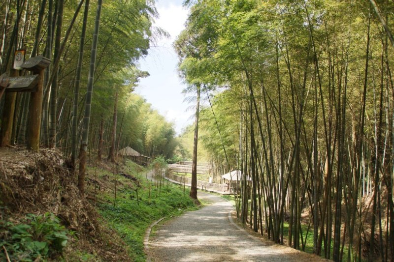 「五元二角」遊憩綠廊道,廊道原始、竹林密布,彷彿重現電影「臥虎藏⿓」的竹林景致。...