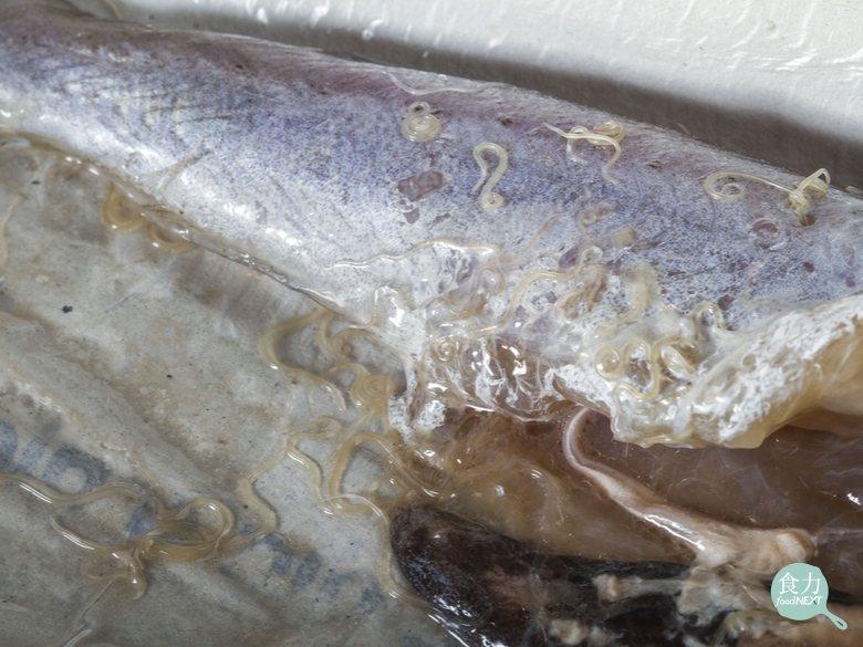 存在於鱈魚中的海獸胃線蟲。 圖片提供/食力