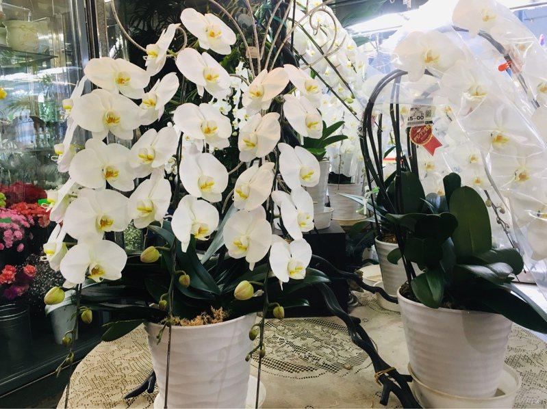 新冠肺炎疫情導致花卉外銷受阻。記者吳姿賢/攝影