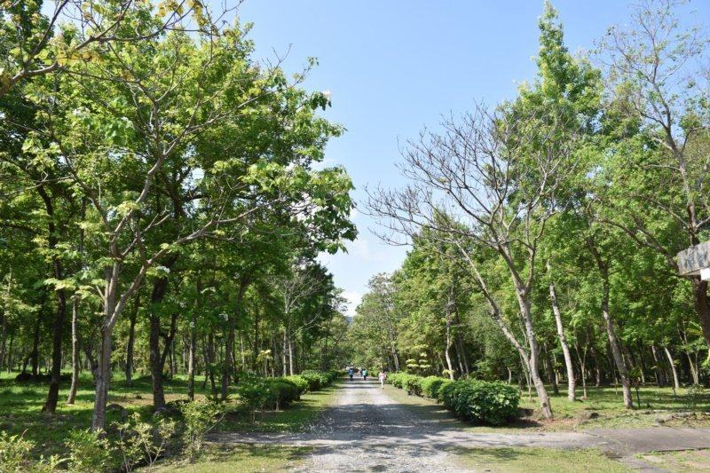 花蓮南華林業文化園區,有條桐花大道,兩旁種有200多棵油桐樹。 圖/王思慧 攝影