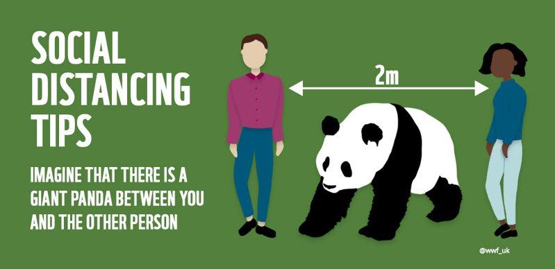 世界自然基金會(WWF )日本分會告訴大家至少要維持「一隻熊貓」的社交距離。圖/WWF Japan官方推特