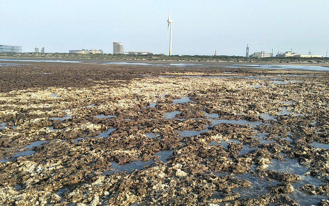 桃園市觀塘的中油天然氣第三接收站上月工作船斷纜擱淺,大潭藻礁原本暗褐色的大片藻礁...