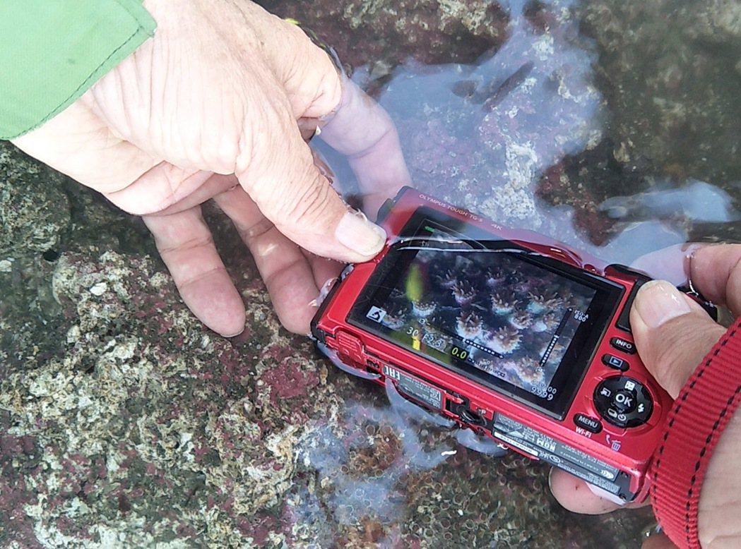 桃園市觀塘的中油天然氣第三接收站上月工作船斷纜擱淺,破壞藻礁嚴重,甚至一級保育珍...