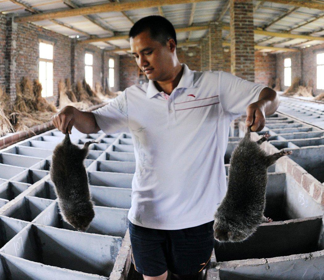 中國官方2月在全國人大常會通過:將全面禁止野生動物的交易與實用,聲稱要「革除濫食...