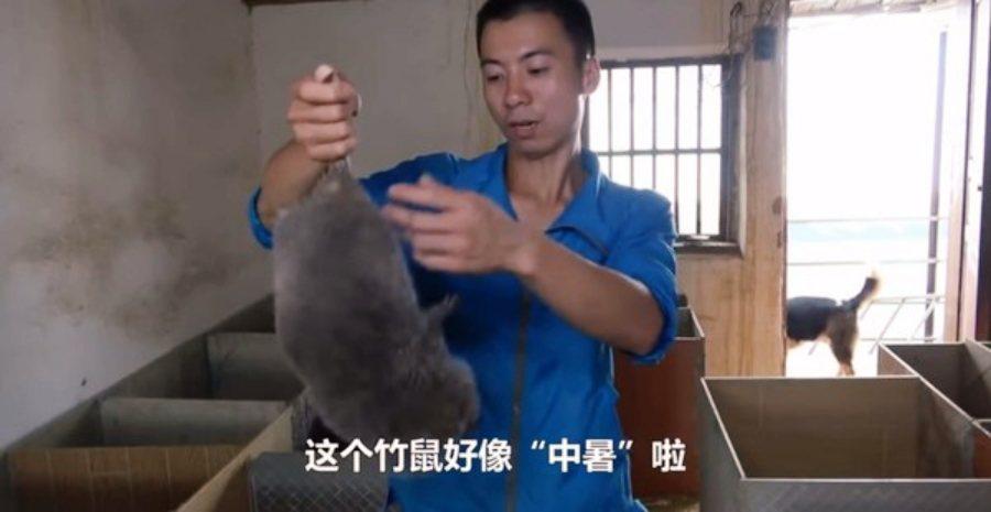 中國疫情,讓長久以來為人弊病的「野味文化」又被重新檢討。以「吃竹鼠的100種理由...