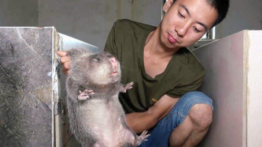 中國疫情大爆發,靠著竹鼠紅遍中國大江南北的華農兄弟慘遭網友圍剿,其影片後來也都陸...
