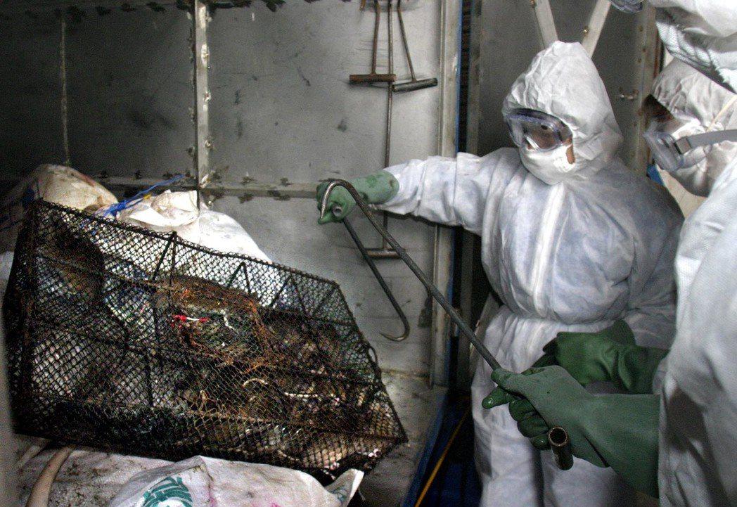 這次的武漢肺炎危機,北京看似堅定表態「禁絕野味」,會不會又是一場短暫的「共體時艱...