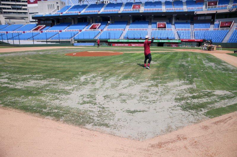 桃園球場內野草況不佳。記者林伯東/攝影