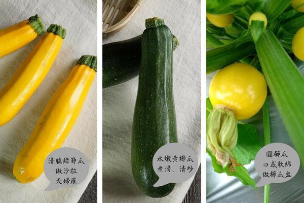 黃、綠、圓品種,不同口感、做法,讓餐桌更繽紛多樣。(圖/台灣好食材)