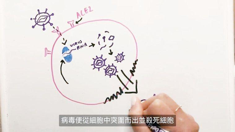 中研院院長廖俊智與女兒聯手完成一部解說新冠肺炎的影片。 圖╱翻攝YouTube