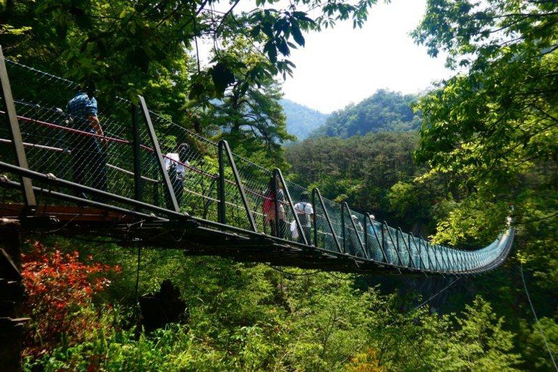 走在奧萬大吊橋,四周滿山遍野的綠意,讓人洗去塵囂。 圖/南投林管處提供