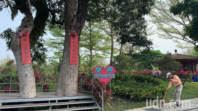 台南市南化區北平里「站長公園」,醒目地標是百年芒果夫妻樹。記者吳淑玲/攝影