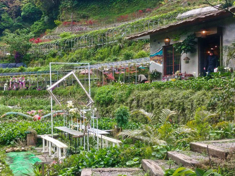 「2020竹子湖海芋季及繡球花季」已於3月27日正式開鑼,海芋賞花期間一直到5月,緊接著由繡球花接力綻放至6月,北市府也推出系列活動。圖/台北市產發局提供