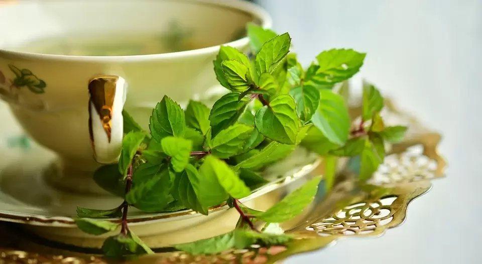 研究發現,薄荷茶能相當程度改善健康成人的長期記憶和工作記憶。 圖/pixabay