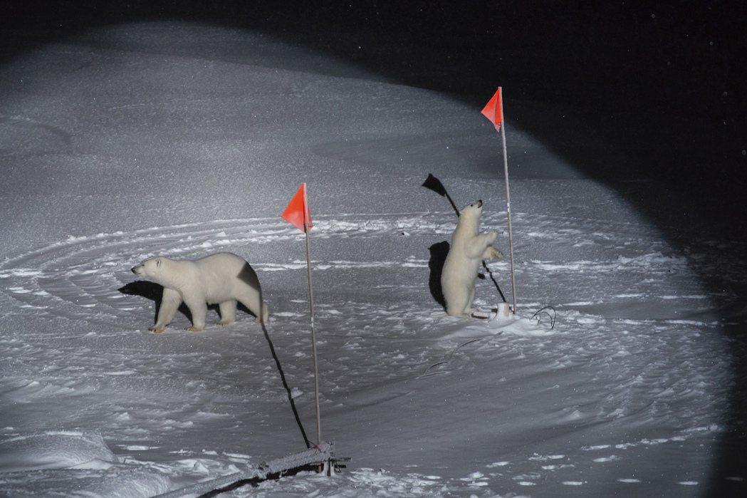 環境新聞最佳單張照片:《紐約時報》Esther Horvath,《北極熊與她的寶...