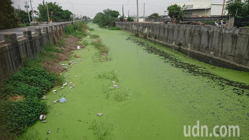 彰化縣溪湖鎮河東里竹北路農田排水綠了。記者簡慧珍/攝影