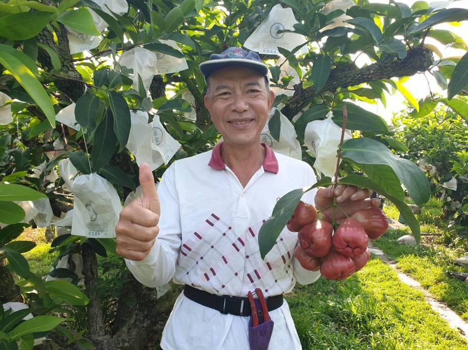 屏東縣林邊鄉農民林孟俞的蓮霧園八八風災慘遭水淹,他用友善環境農法的草生栽植,樹勢逐漸回復,前年通過產銷履歷驗證,果實甜美又有安全掛保證。記者潘欣中/翻攝