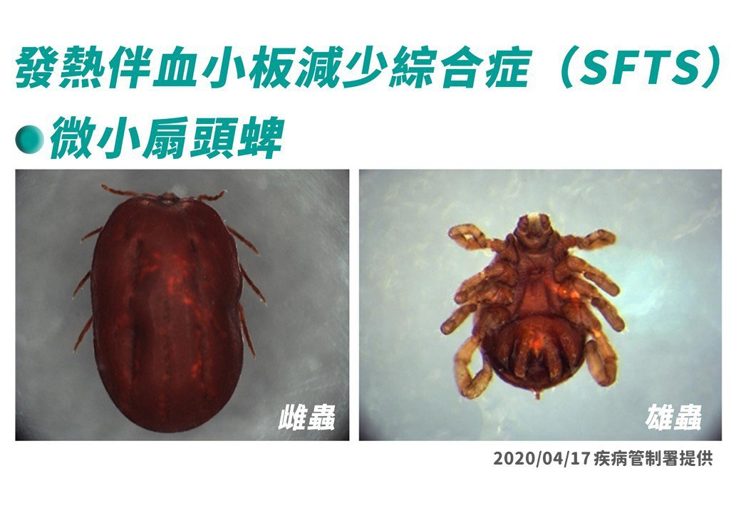 我國過去無SFTS確定病例,也無主要病媒長角血蜱發現紀錄發表,但因國內仍有次要病...