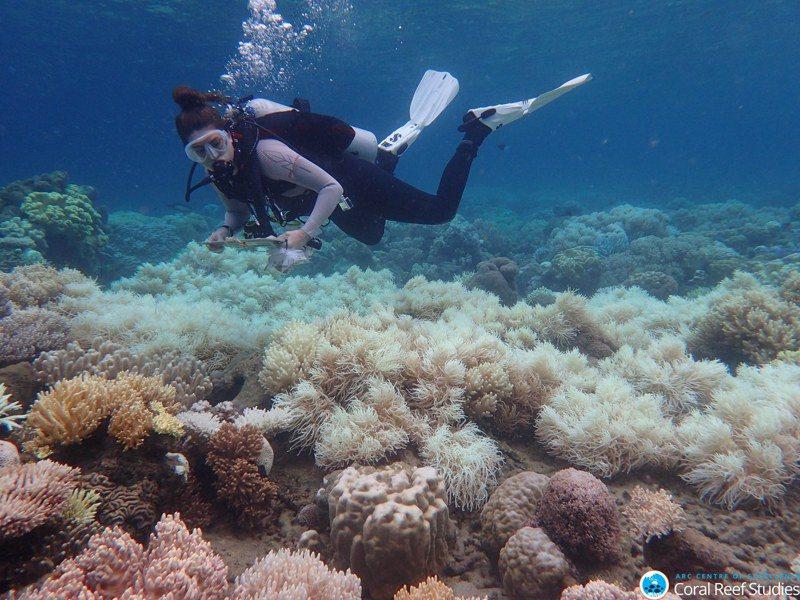 大堡礁今年發生近年來最大規模的珊瑚白化災情。圖/世界日報提供
