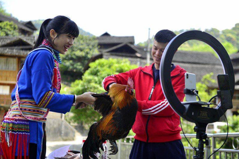 位在偏鄉的廣西龍勝以「直播帶貨」助力銷售當地養殖的鳳雞。 中新社