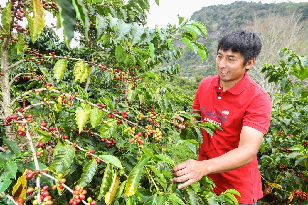 飽滿紅潤的藝伎豆是方政倫的得意之作。記者 陳立凱/攝影 記者陳立凱/攝影