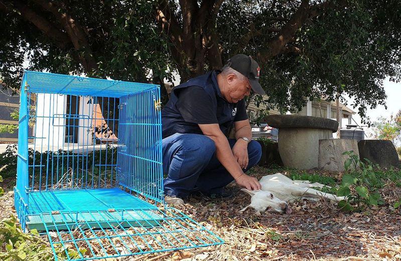 台灣動物緊急救援小組隨行獸醫師以麻醉吹箭,輕微將受困犬隻鎮定後,救援任務才突破。圖/台灣動物緊急救援小組提供