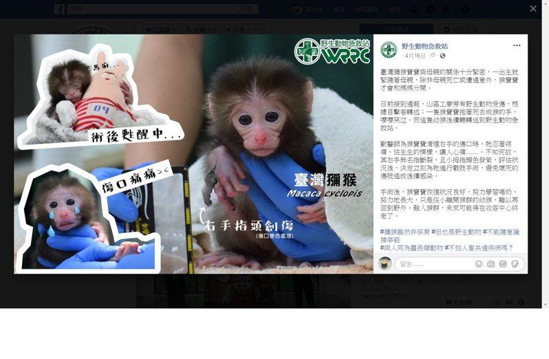 野生動物急救站貼文緊急撤下母猴遭烹煮經過,改為講述援救幼猴的醫治現況。圖/翻攝自野生動物急救站網頁