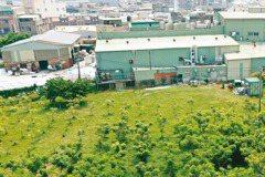 2000棵生機樹…農民笑了 種無患子 救活農地