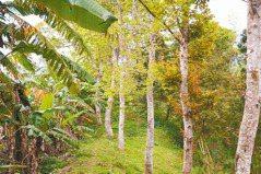 18載園區夢…孩子樂了 賣股種樹 生態為師