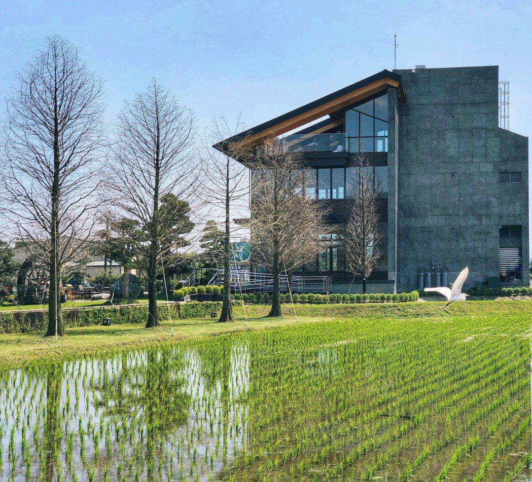 棗稻田有機耕作場域、保留自然濕地,帶來豐富自然生態的多樣性。 棗稻田/提供