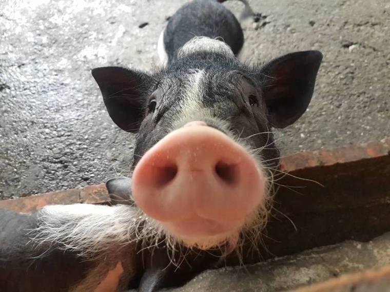 廣興農場提供一系列農村生活體驗活動。圖/取自廣興農場 鴨母寮豬哥窟粉絲頁