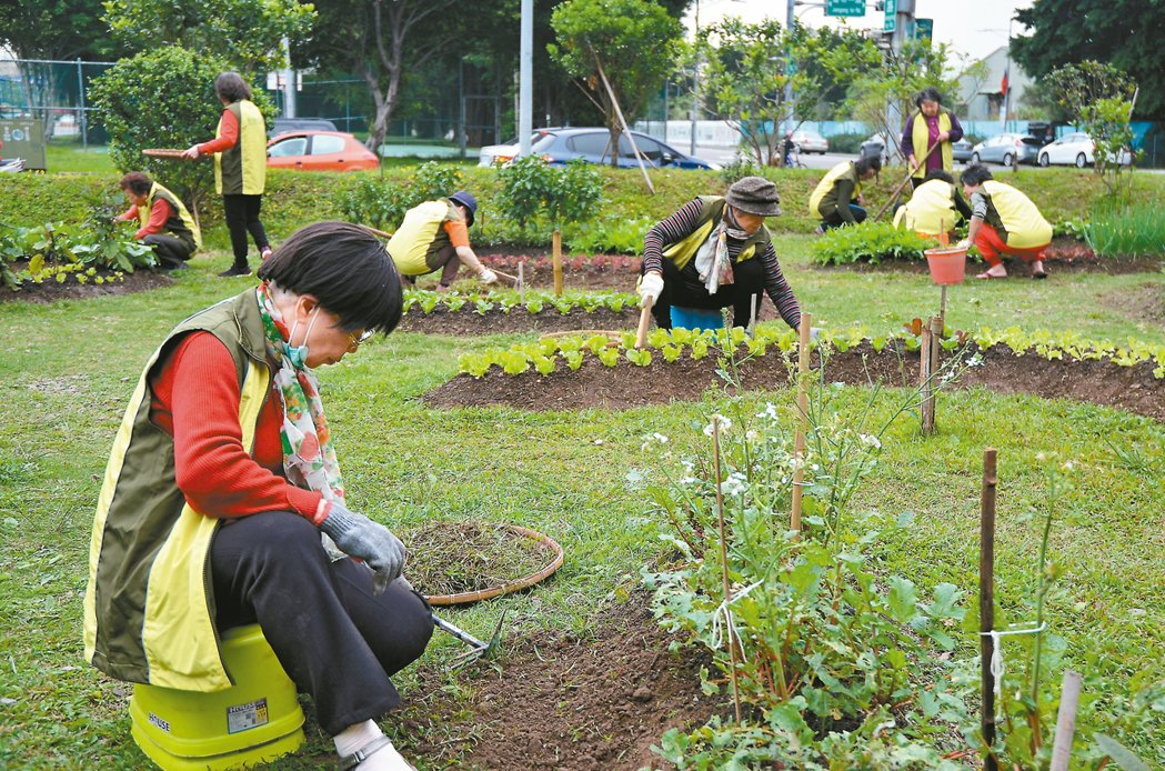 新竹市馬偕醫院旁的食物森林。 記者鄭朝陽/攝影