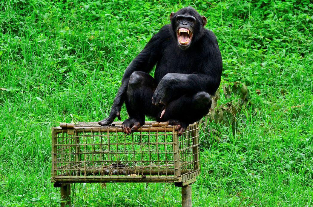 由於UWEC肩負的任務裡,還包括野生動物的醫療救援保育,因此UWEC更擔憂財政庫...