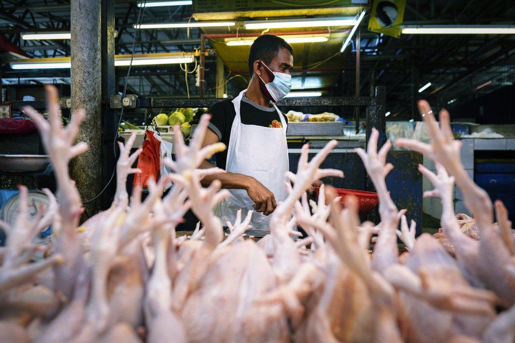 耿爽強調,在中國並沒有「濕貨市場」這樣的概念,市場上大部分賣的是新鮮的魚、魚、蔬...