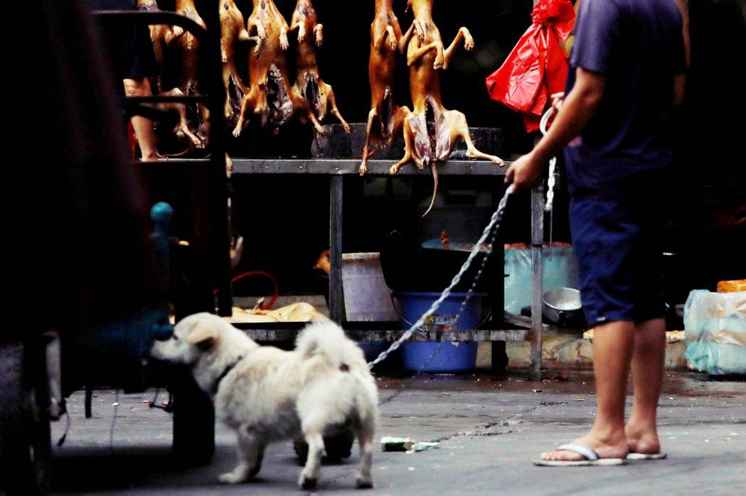 狗肉市場算不算濕貨市場?市場宣稱「人工繁殖」的動物——比如說穿山甲——是不是來自...