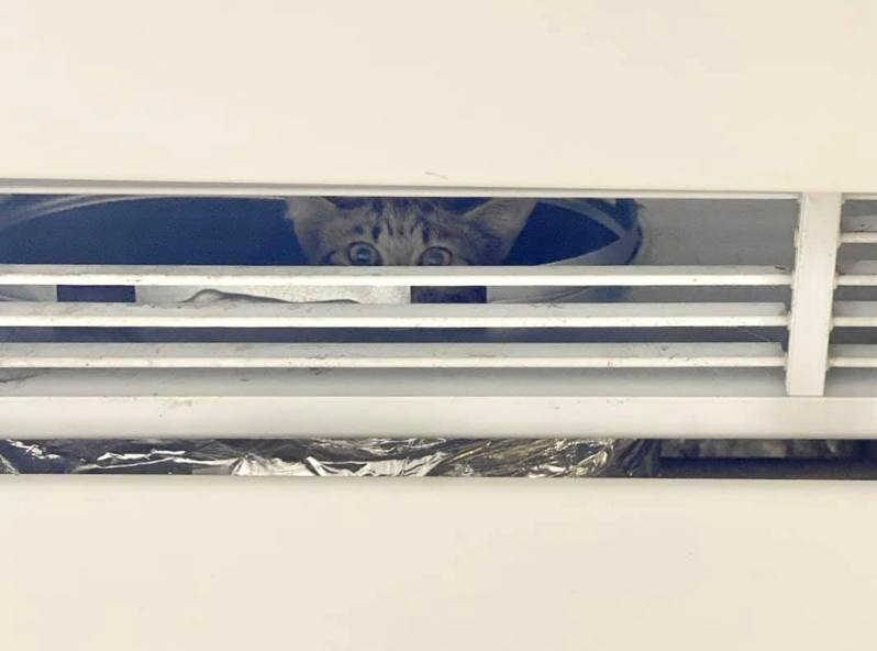 周有民眾發現一隻灰色花紋小貓在台北車站地下一樓的冷氣通風管內,肚子餓得喵喵叫。圖/取自網路