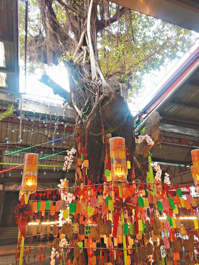高雄苓雅區意誠堂廟前有棵百年老榕樹,許多信徒掛上許願卡。 記者謝梅芬/攝影