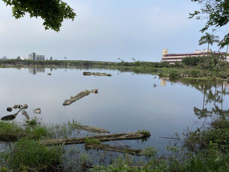 羅東林業文化園區儲木池變為生態池。 圖/羅建旺 攝影