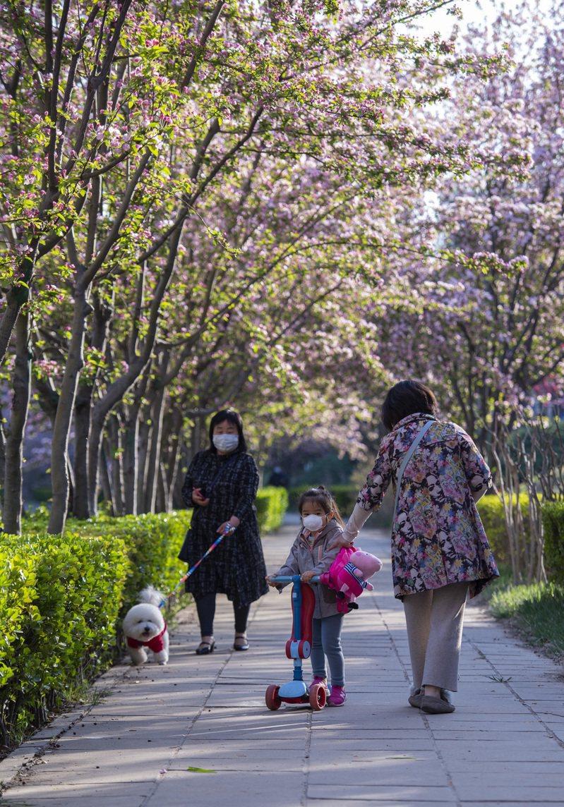疫情使大城市更重視公共空間。圖為有「海棠花溪」之稱的北京市朝陽區望京地區一處林蔭小道上,海棠花綻放,吸引市民流連其中。 中新社