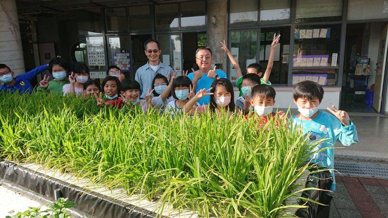 彰化縣芳苑小小朋友種水耕水稻,尋找日照與植物之間的關係。記者簡慧珍/攝影