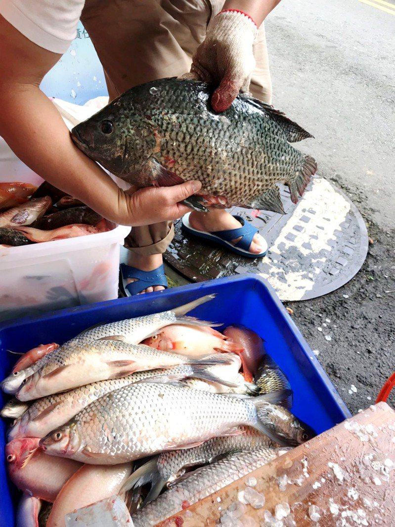 日月潭魚種不少,是南投縣內的重要觀光發電儲水多用型湖泊,更擁有全台唯一的高山淡水漁會。圖/民眾提供