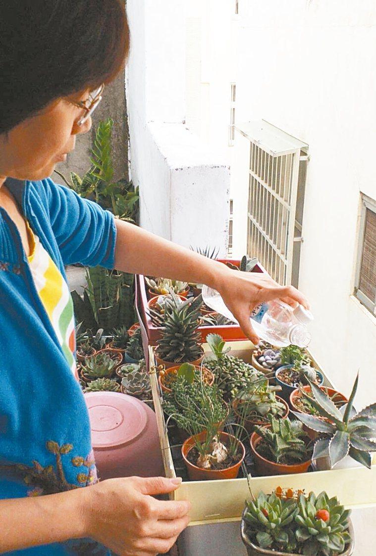 彰化簡姓家庭主婦在疫情期間宅在家,在陽台種了約兩百盆多肉植物,自得其樂,療癒對疫...