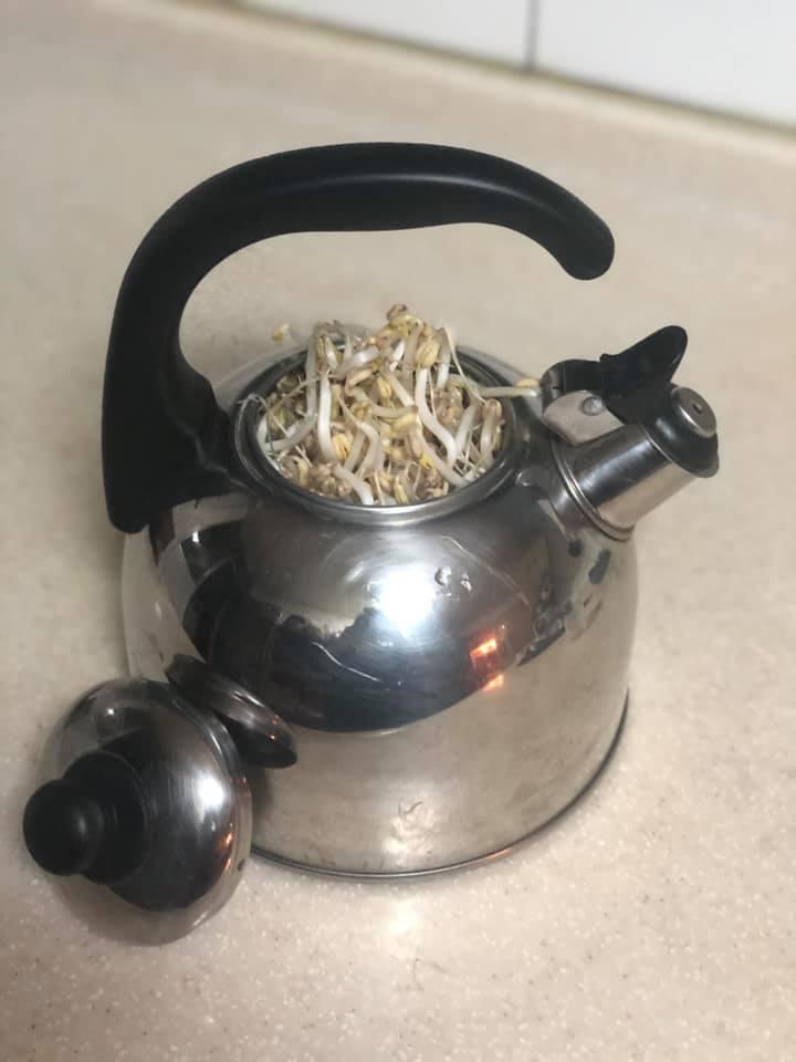 網友用水壺種出豆芽菜。圖擷自FB「我愛全聯-好物老實說」