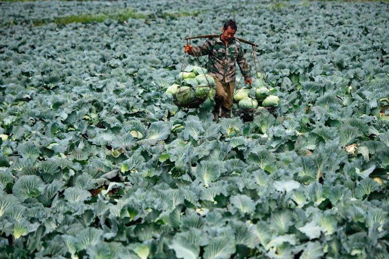 「六保」當中,中共特別關注大規模失業以及糧荒之嚴峻形勢。 圖/法新社