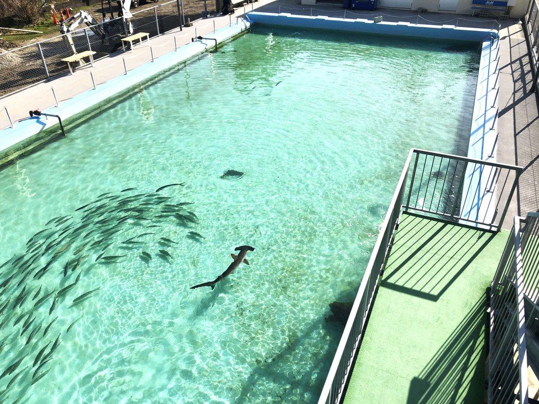 校園裡原有的25公尺游泳池中儘管不再傳來孩童們練習、嬉鬧的聲音,卻可見到雙髻鯊、...