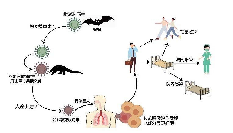 圖說: 2019新型冠狀病毒傳播途徑示意圖