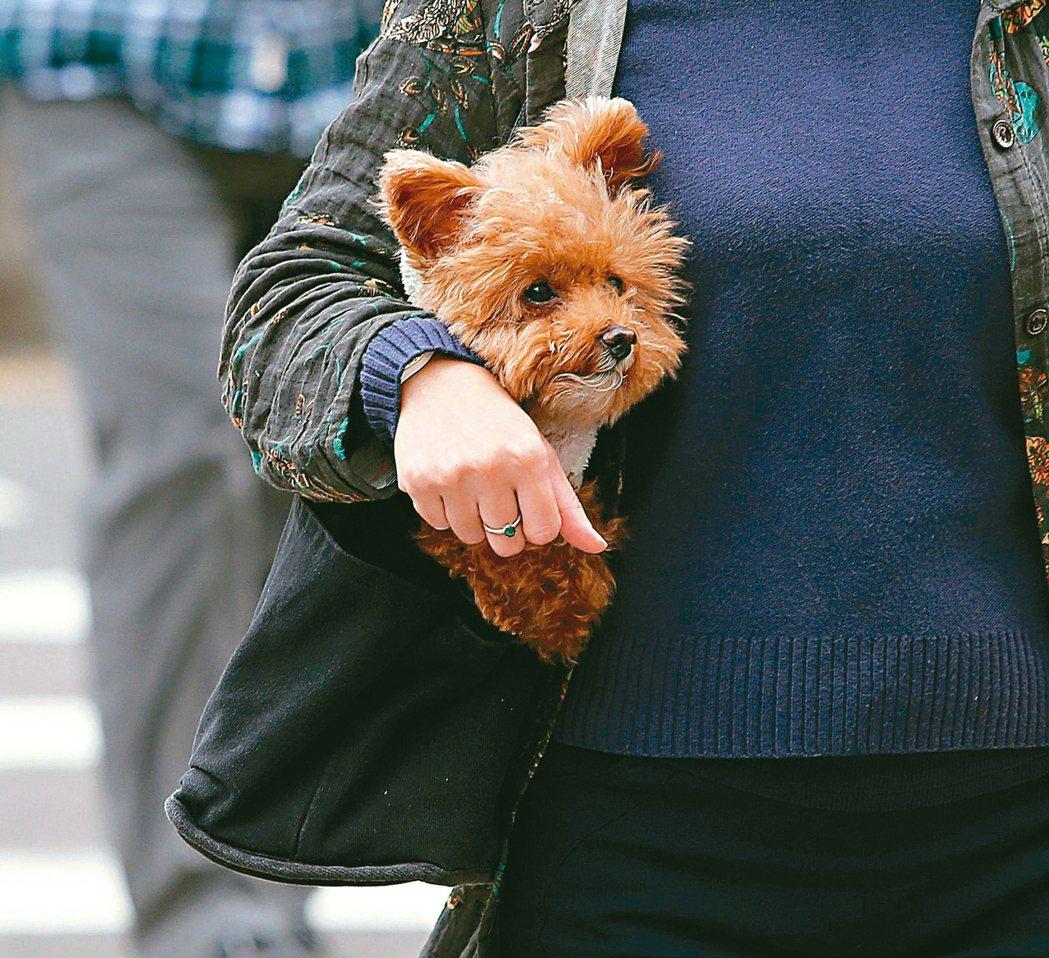 有研究顯示,銀髮族養寵物,可以增添生活趣味。記者林澔一/攝影