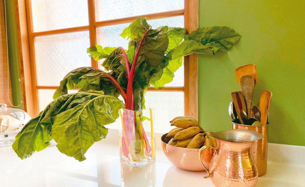 插在透明花瓶裡的莙薘菜,是窗邊美麗的風景。 圖/朱慧芳